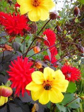 Tomás Fernández-De tots els Colors- Dunrobin Castle Gardens